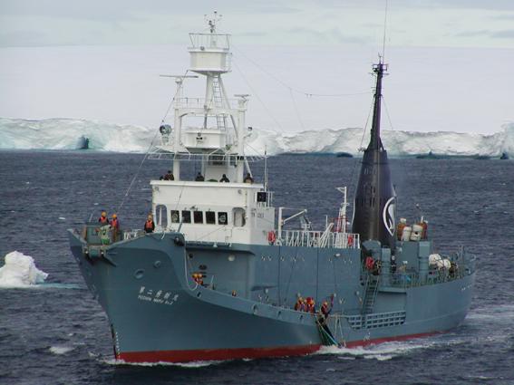 Uno de los arponeros Yushin Maru, con una ballena al costado