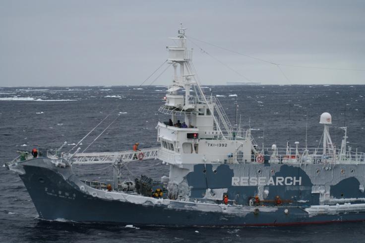 Uno de los arponeros Yushin Maru, en el Antártico